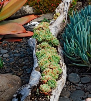 Tree trunk Planter for Succulents