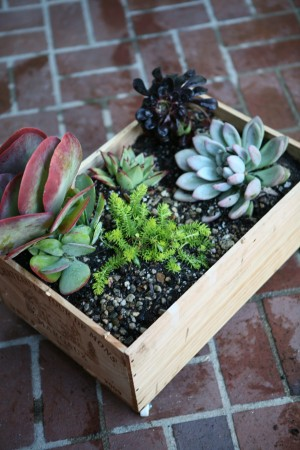 Wine Crate Planter DIY