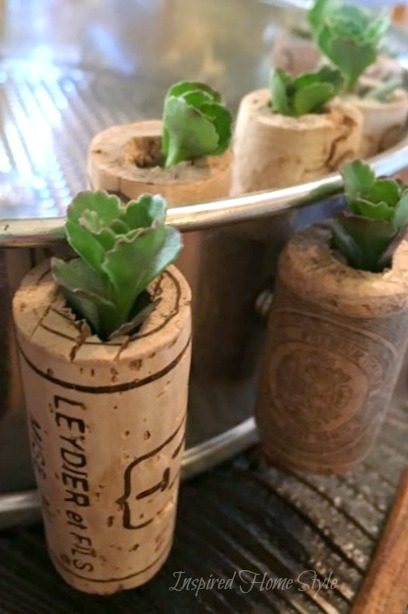 Mini Succulent Cork Planters - Wine Cork Magnets