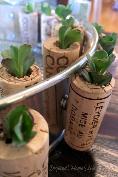 Mini Succulent Cork Planters Inspired Home Style