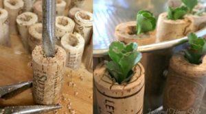 Mini Succulent Cork Planters